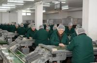 Сортировка по цвету перерабатываемого грецкого ореха в Украине.