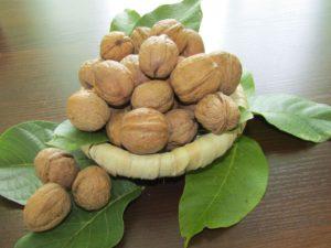 Оптовая продажа грецкого ореха иностранным импортёрам