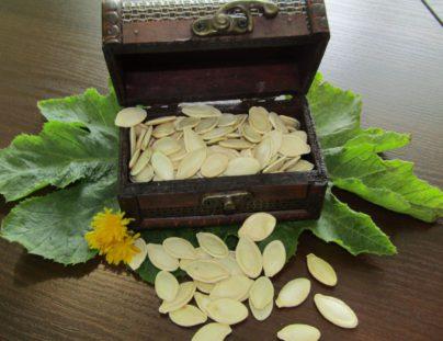 Експортируем тыквенную семечку сорт Украинская многоплодная